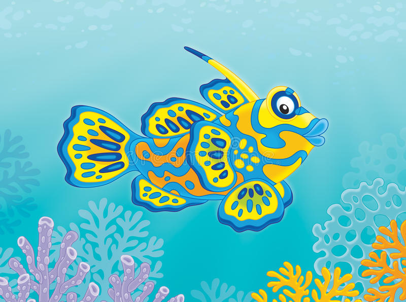 Mandarin fish. Illustration of a tropical mandarin fish swimming over corals vector illustration