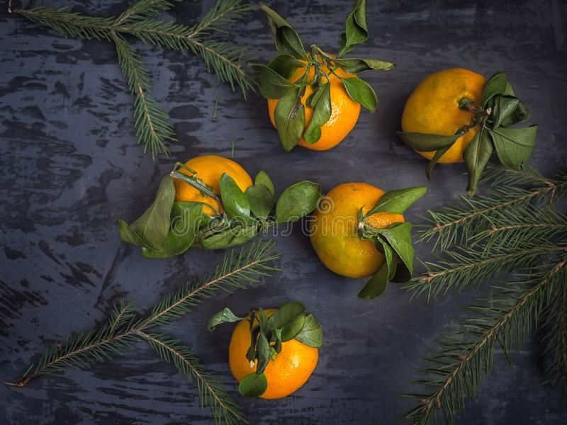 Mandarin fruit with leaf on dark background, fir branches stock photography