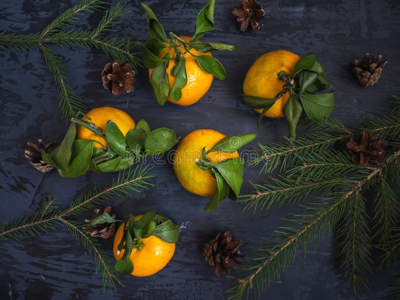 Mandarin fruit with leaf on dark background, fir branches royalty free stock photography