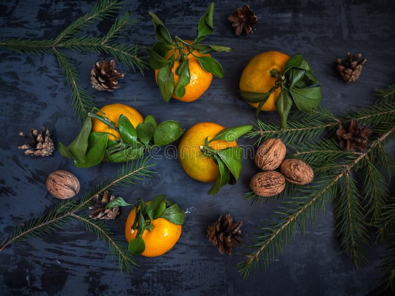 Mandarin fruit with leaf on dark background, fir branches stock image