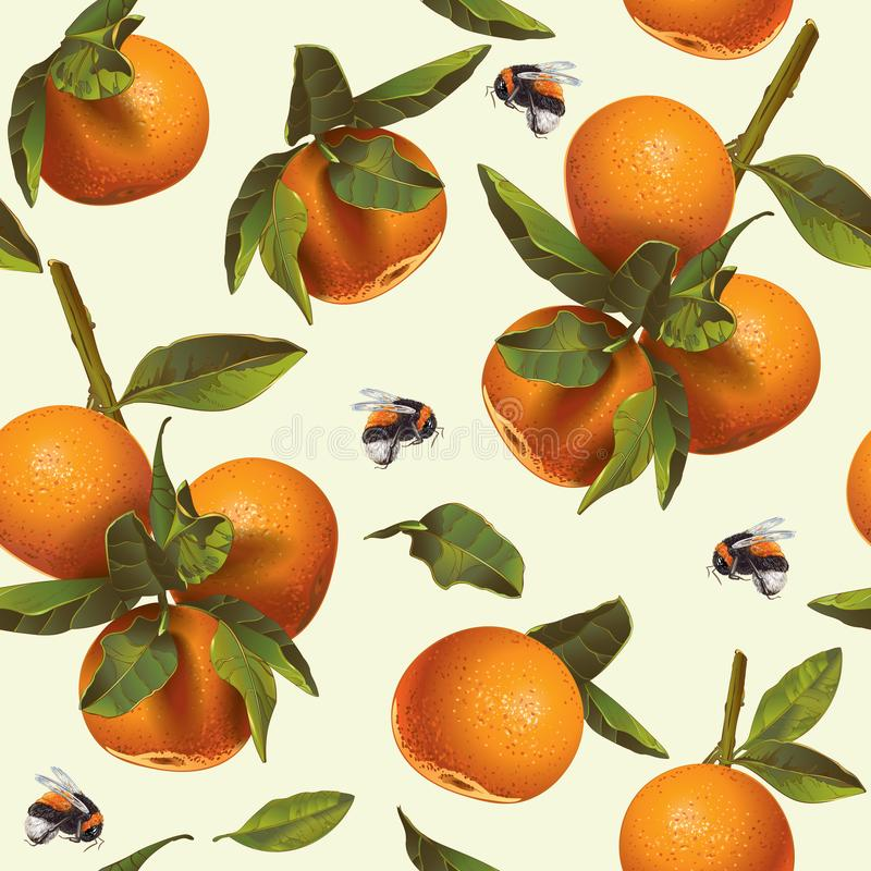 Mandarin fruit pattern. Vector citrus seamless pattern with mandarin fruit and bumblebee. Background design for tea, juice,cosmetics, baking, candy and sweets royalty free illustration