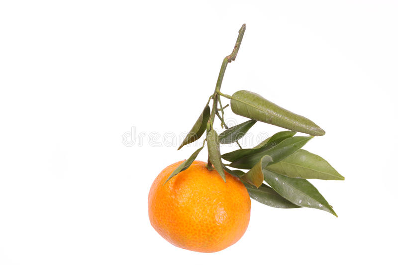 Download Mandarin with leaves stock photo. Image of whole, natural - 12001774