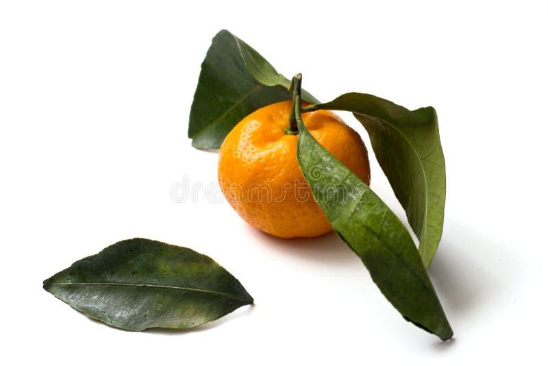 Mandarin orange with green leaves isolated on white background royalty free stock image