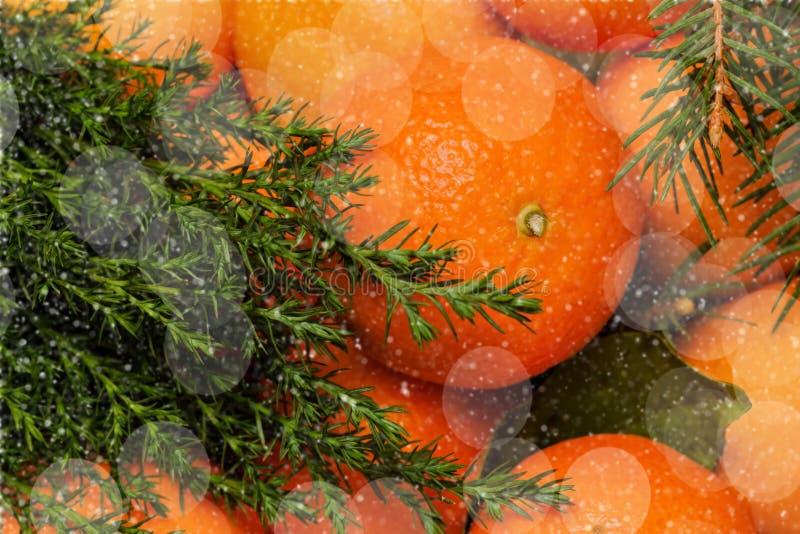 Mandarin med sidor, julgran, bokeh Traditionell efterrätt, nytt år royaltyfri fotografi
