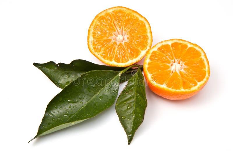 Mandarin orange stock images