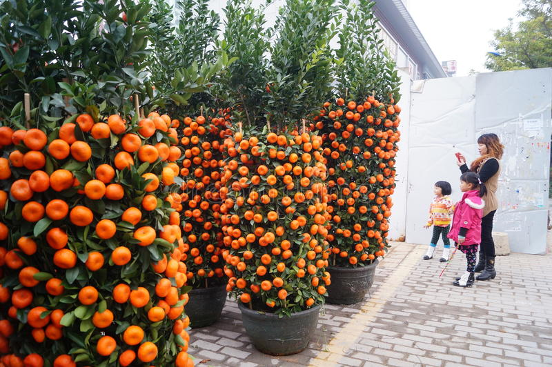 mature-citrus-trees-for-sale-blonde-nakend-exotic