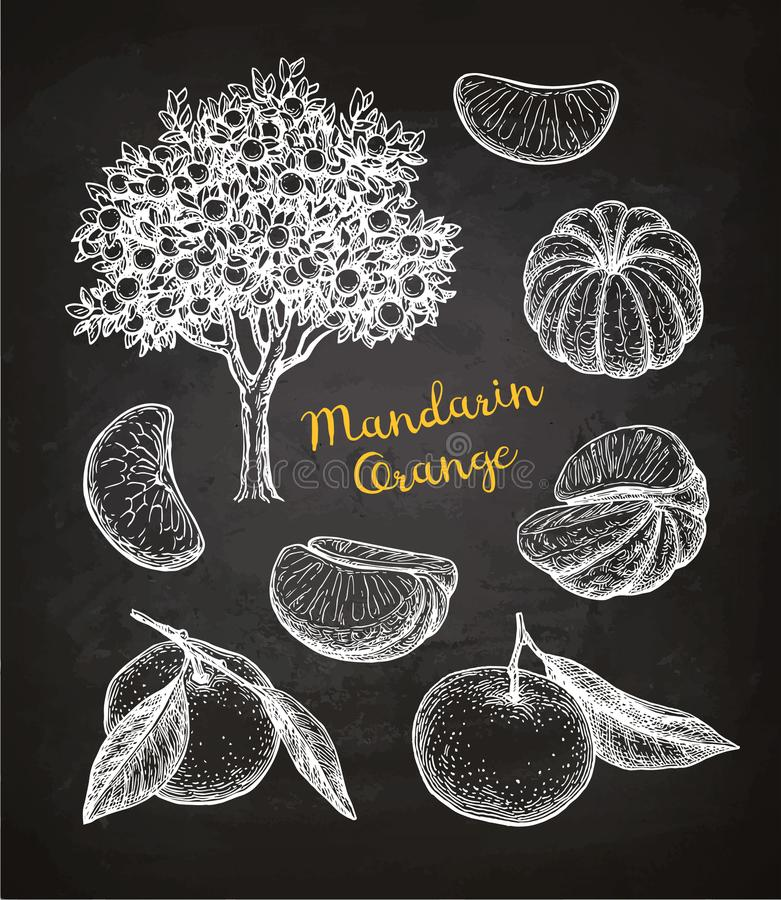 Mandarin orange set. Chalk sketch on blackboard background. Hand drawn vector illustration. Retro style vector illustration