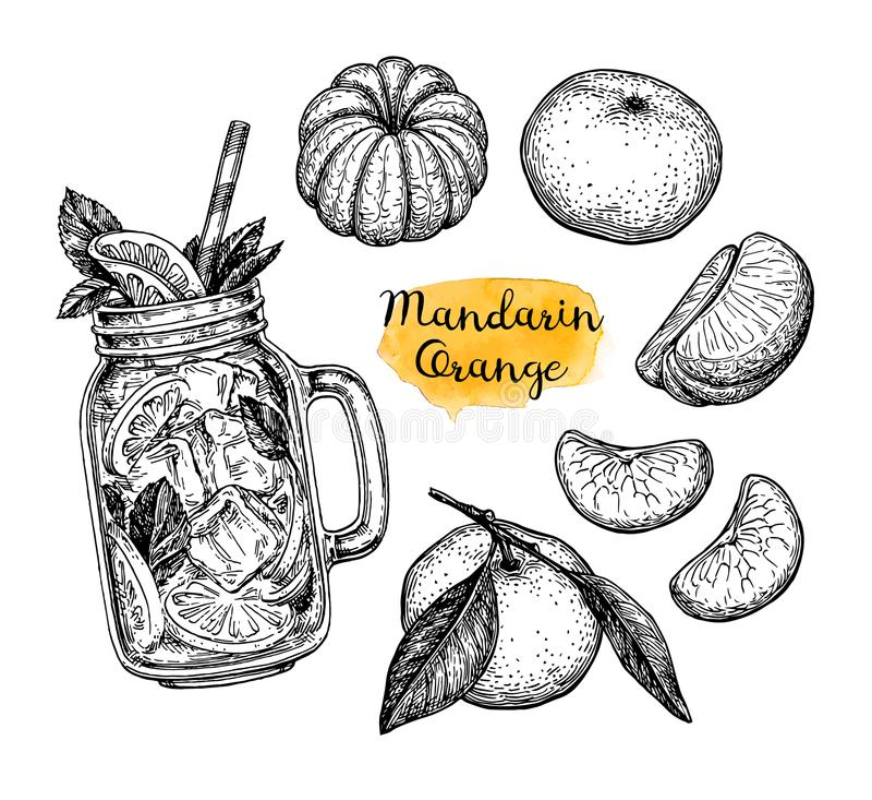 Ink sketch of tangerines. royalty free illustration