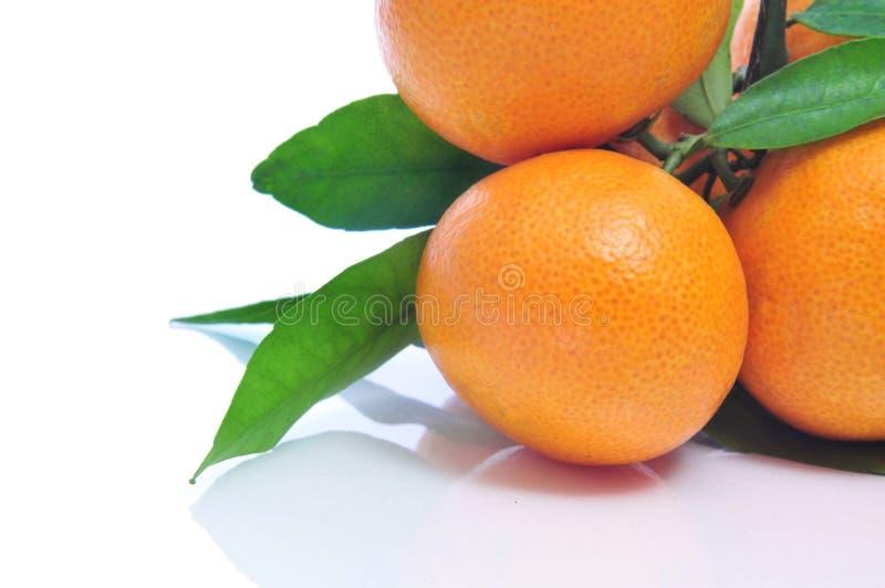 Download Mandarin oranges stock photo. Image of green, mandarin - 25965522