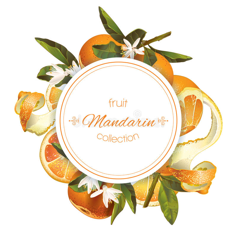 Mandarin round banner. Vector mandarin round banner on white background. Design for sweets and pastries filled with citrus fruit, dessert menu, natural cosmetics stock illustration