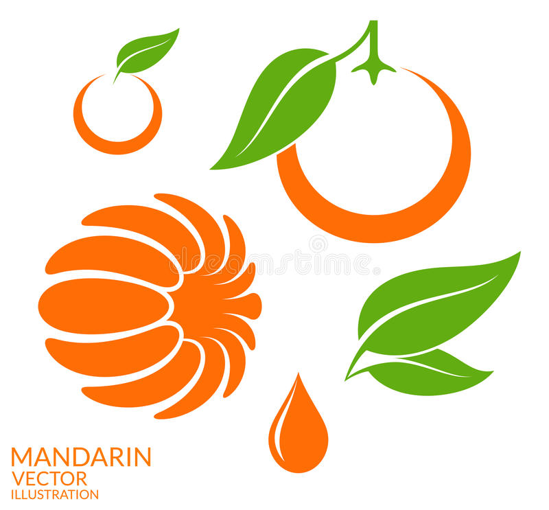 Mandarin. Set. Vector illustration (EPS 10 royalty free illustration