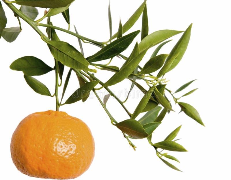 Mandarin tak royalty-vrije stock fotografie