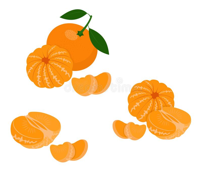 Mandarin, tangerine, clementine with leaves isolated on white background. Citrus fruit. Vector Illustration vector illustration