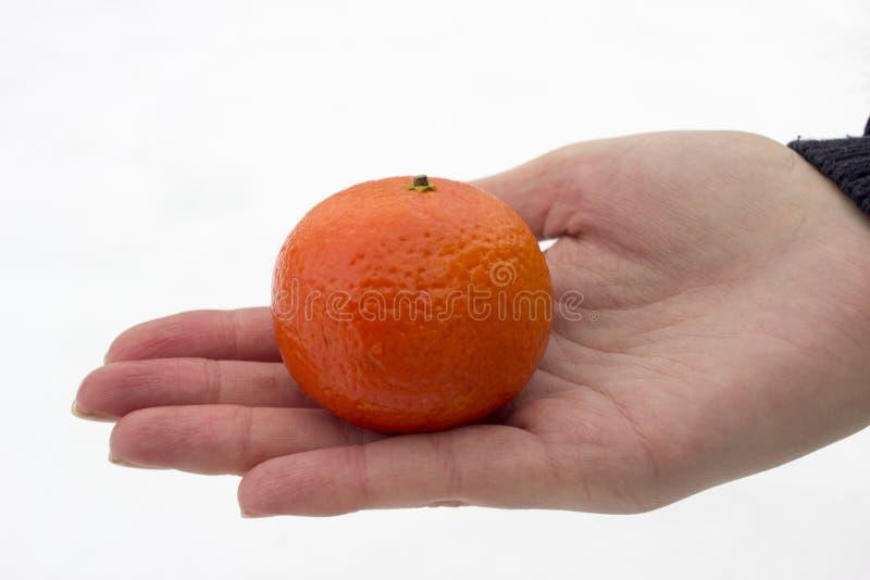 Mandarin ter beschikking tegen de achtergrond van sneeuwtak stock afbeelding