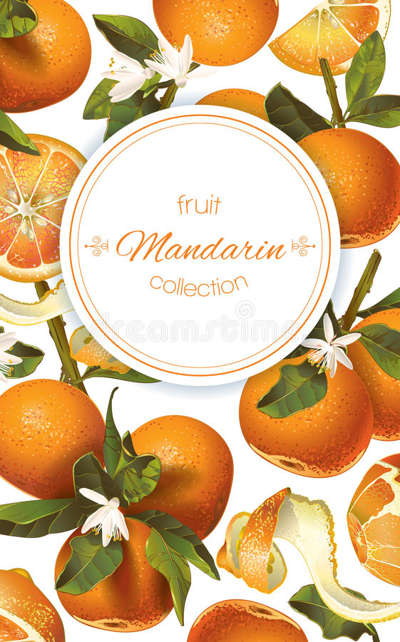 Mandarin vertical banner. Vector mandarin vertical banner on white background. Design for sweets and pastries filled with citrus fruit, dessert menu, natural royalty free illustration