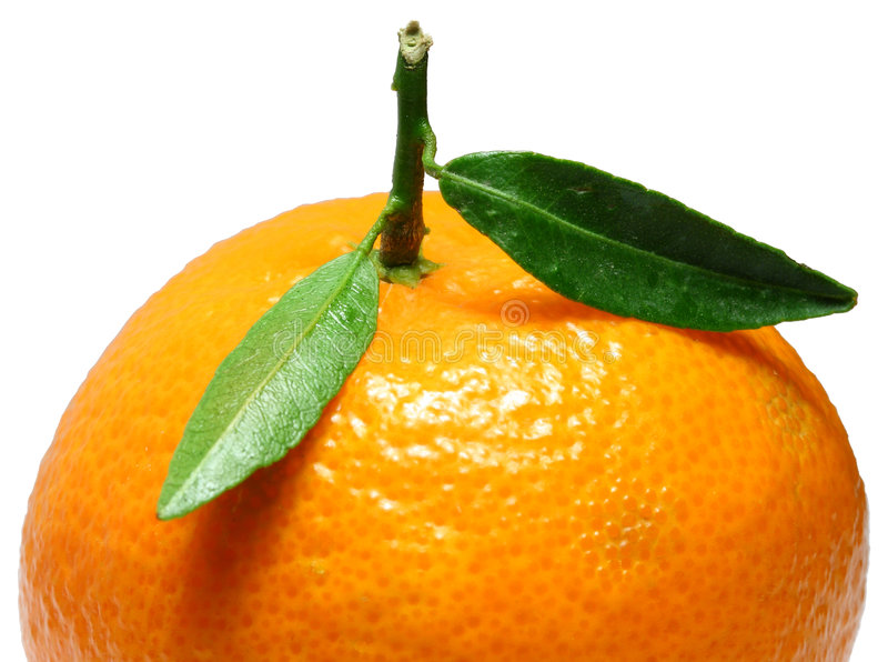 Mandarin5 stock photo