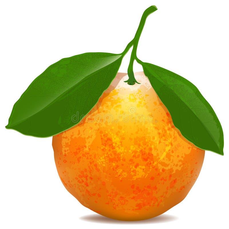 Mandarina con las hojas en el fondo blanco ilustración del vector