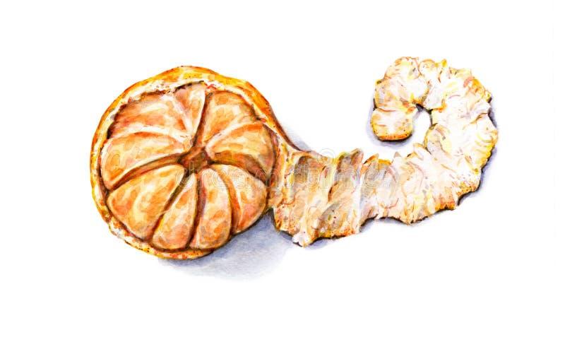 Mandarina pelada acuarela madura Trabajo hecho a mano Fruta tropical Alimento sano ilustración del vector