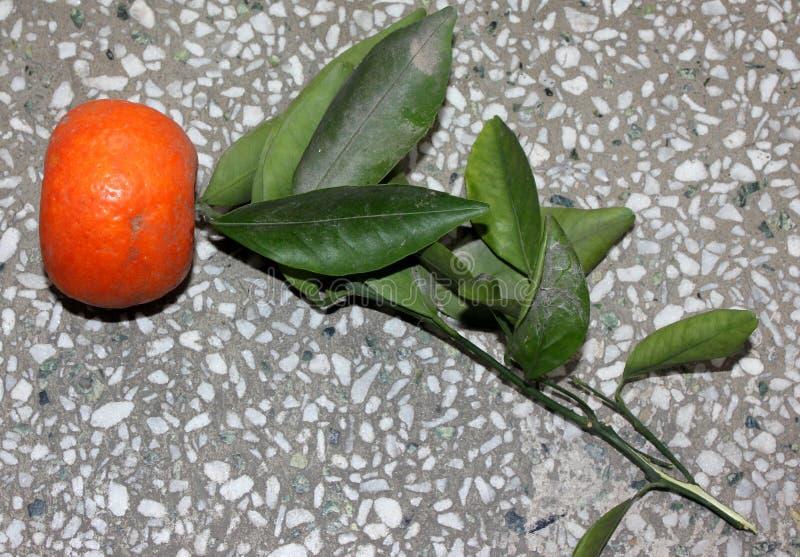 Mandarina, tangerina de la fruta cítrica colocado a menudo debajo de deliciosa de la fruta cítrica imagen de archivo libre de regalías