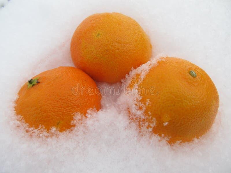 Mandarinas amarillas en nieve fotos de archivo libres de regalías