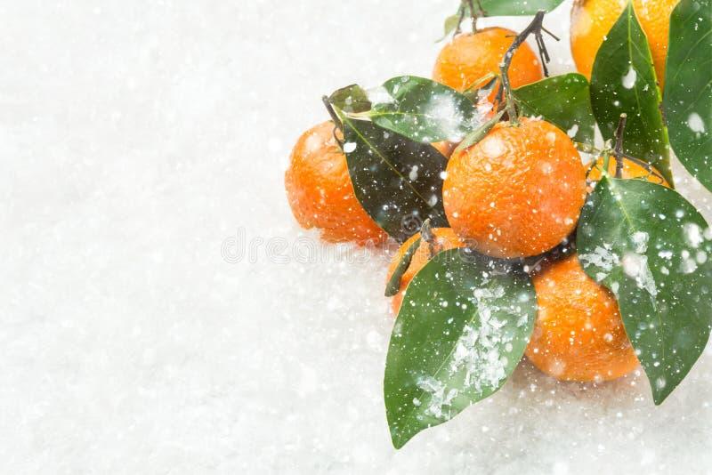 Mandarinas anaranjadas brillantes en ramas con nieve que cae de las hojas verdes Escena del día de fiesta del Año Nuevo de la Nav foto de archivo libre de regalías