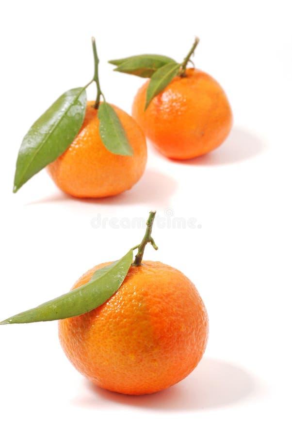 Mandarine image stock