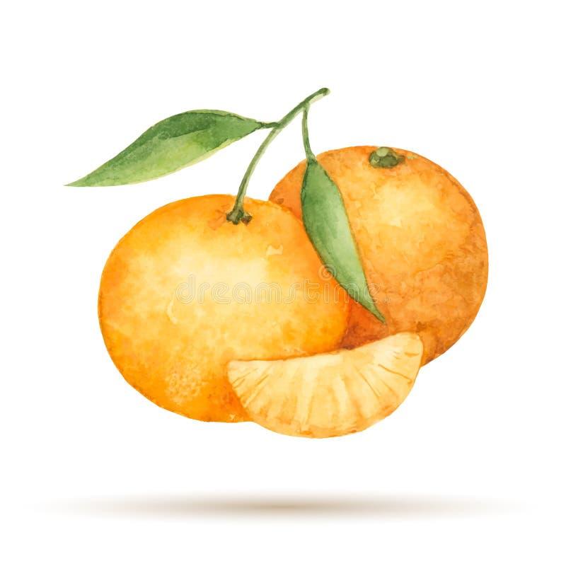 mandarine illustration stock