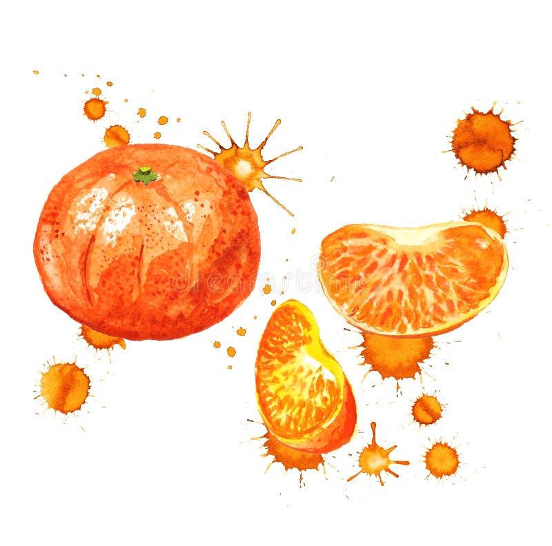 Mandarine avec des taches de peinture illustration libre de droits