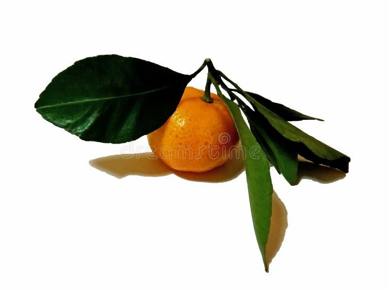Mandarine avec la feuille verte d'isolement sur le fond blanc photographie stock libre de droits