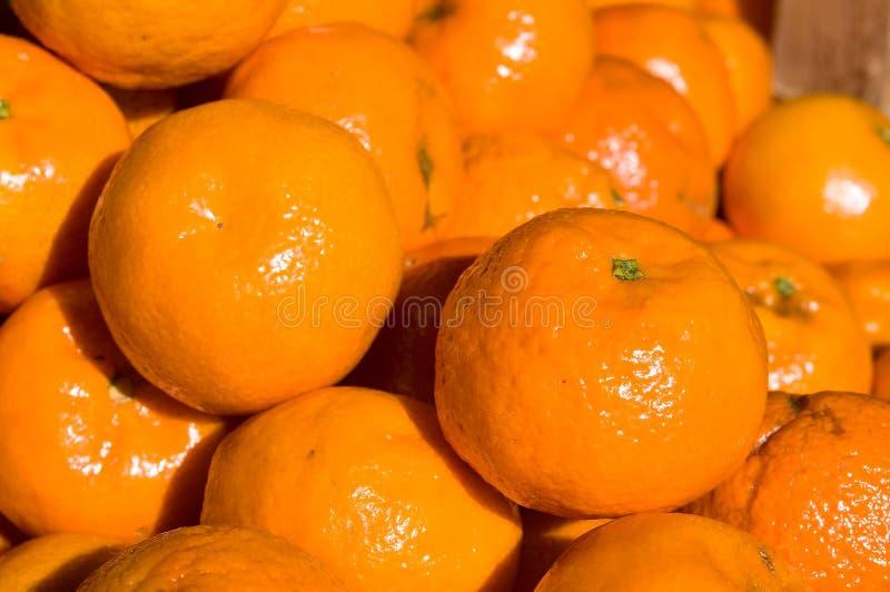 Mandarine de mandarine image stock