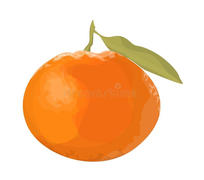 Mandarine fraîche d'isolement illustration stock