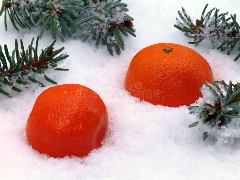 Mandarine ist Schnee stockfotografie