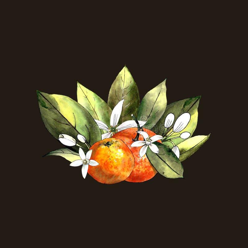Mandarine mit Blättern und Blumen auf einem braunen Hintergrund Zeichnungsmarkierungen lizenzfreies stockbild