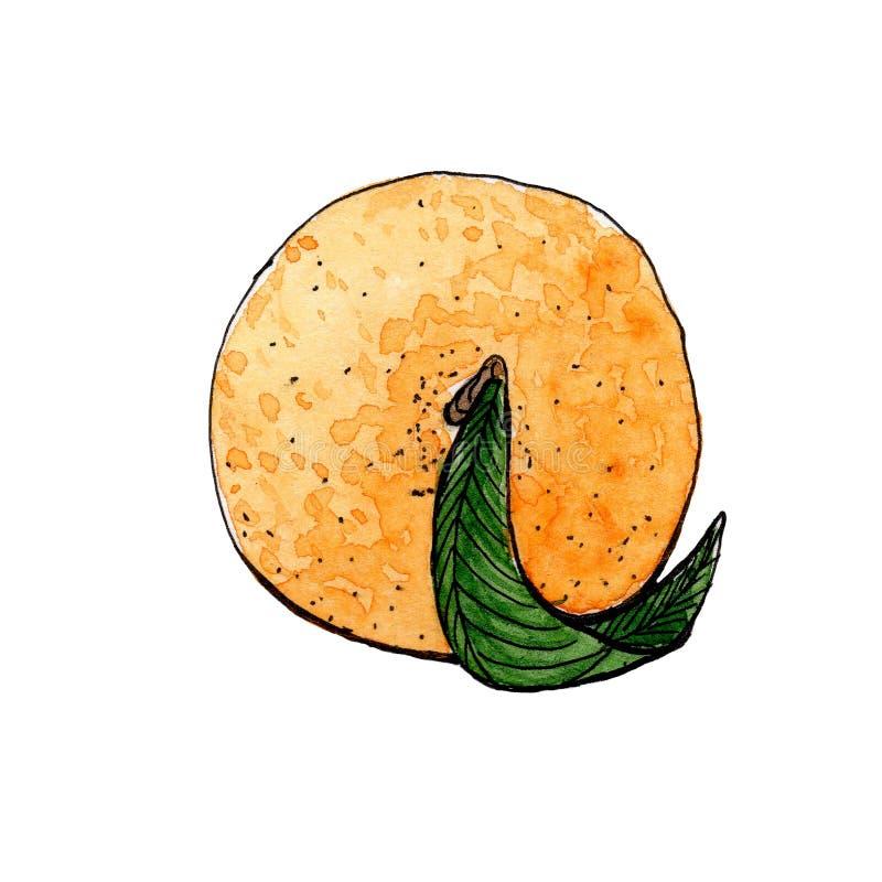 Mandarine orange avec l'aquarelle verte de croquis de feuille Vue de ci-avant illustration libre de droits