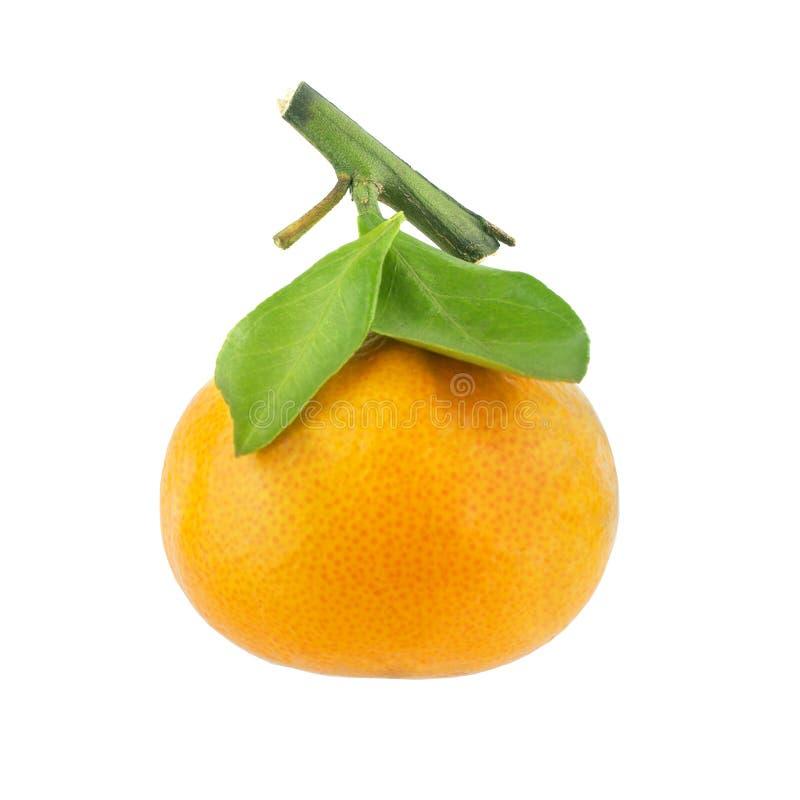 Mandarine sur une branche avec les feuilles vertes sur un plan rapproché d'isolement par fond blanc image libre de droits