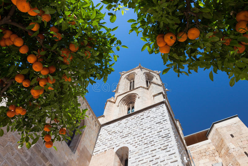 Mandarinebaum stockbild