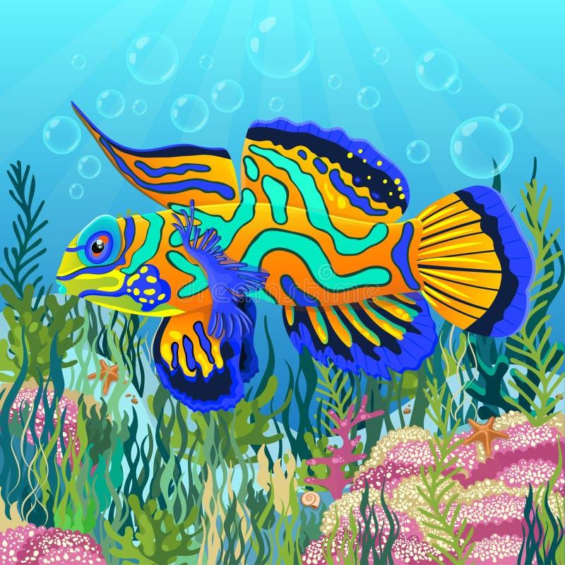 Mandarinenfische an der Unterseite von Meer mit den bunten zeichnenden Algen, Unterwasserwelthintergrund Helle mehrfarbige blaue  vektor abbildung