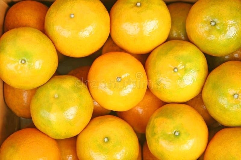 Mandariner för bästa sikt på bakgrund, ny skörd och nytt från fruktodling arkivbilder