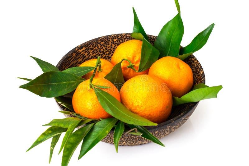 Mandariner på filialerna på en vit bakgrund royaltyfria bilder