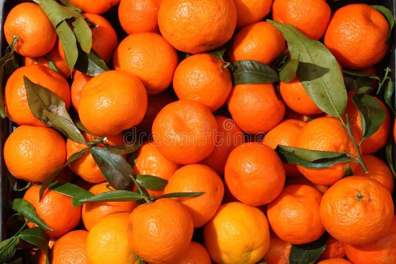 Mandarinerna för försäljning på livsmedelsbutiken's bank royaltyfria bilder