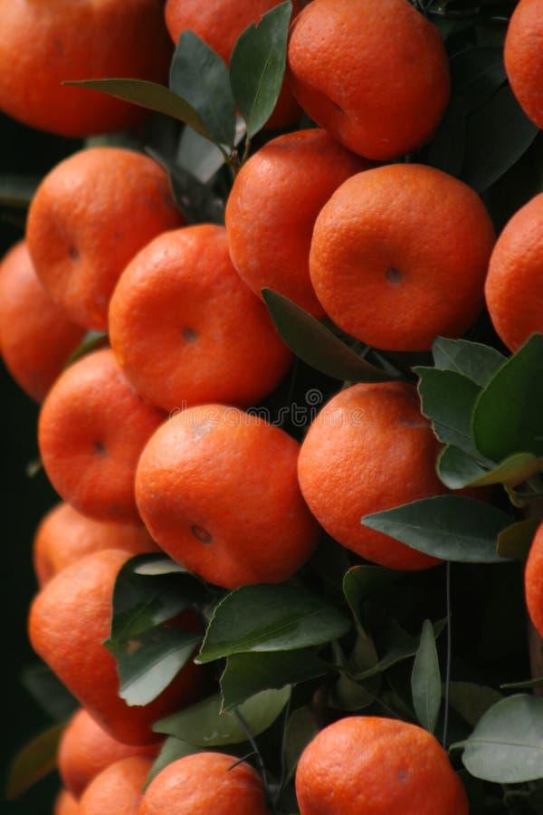 Mandarines chanceuses images stock