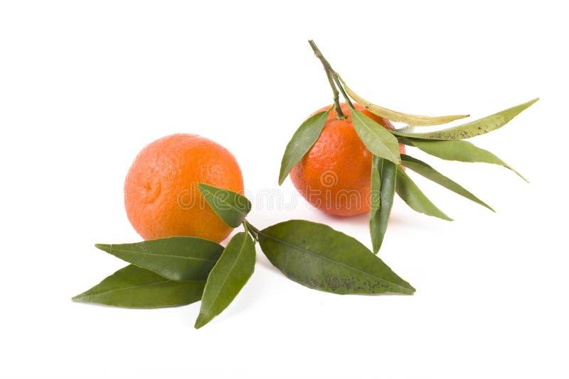 Mandarines frescos aislados en el fondo blanco Las naranjas se arreglan en filas foto de archivo libre de regalías