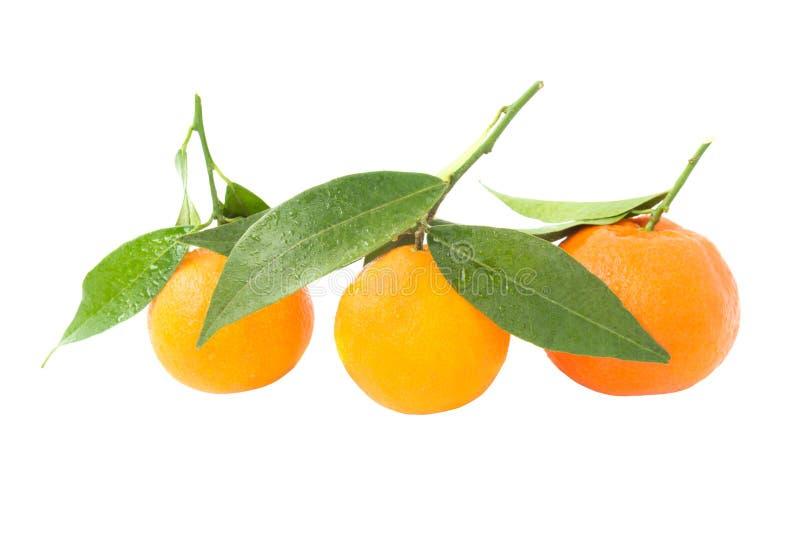 Mandarines oranges avec les feuilles vertes photos stock