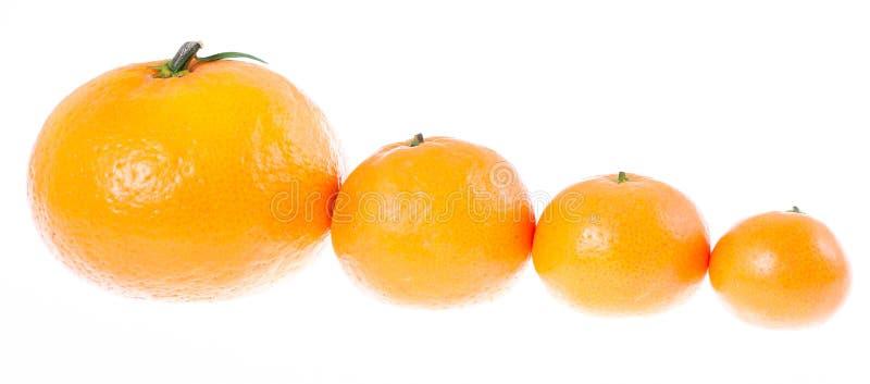 Mandarines par taille dans une ligne photo libre de droits