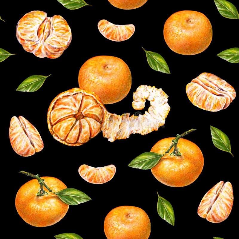 mandarines Retrait d'aquarelle Mandarine épluchée mûre Travail manuel Fruit tropical Nourriture saine Configuration sans joint po illustration stock