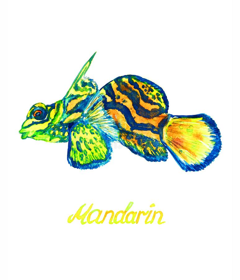 Mandarinfisk arkivbilder