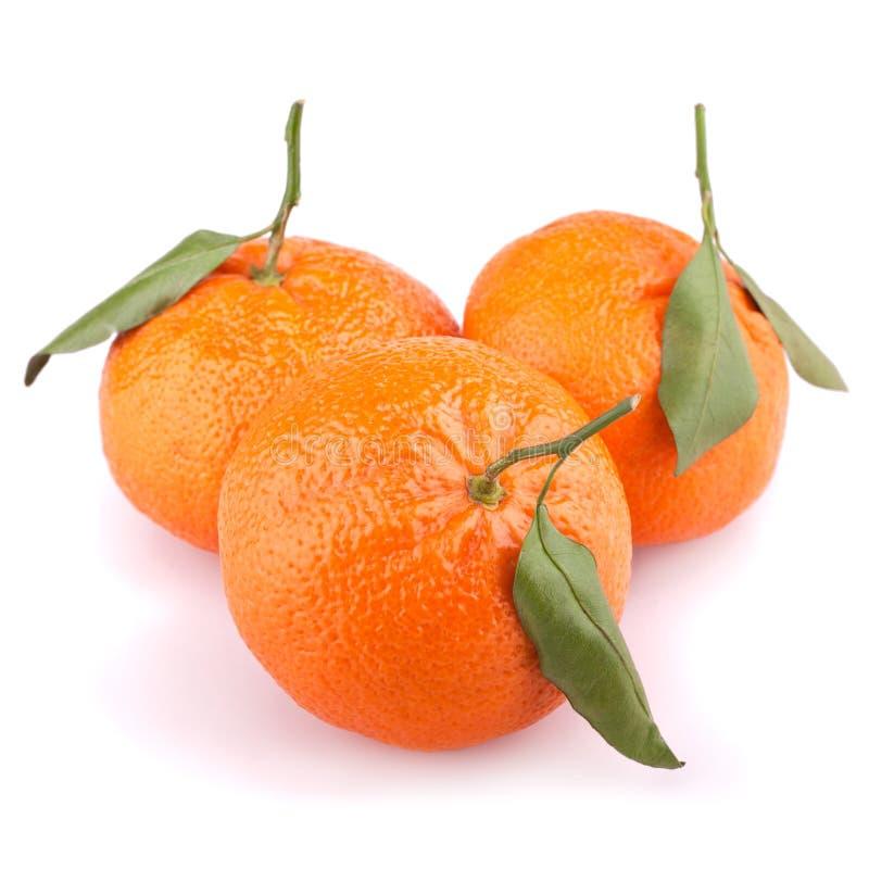 Mandarini con i fogli isolati su bianco fotografia stock libera da diritti