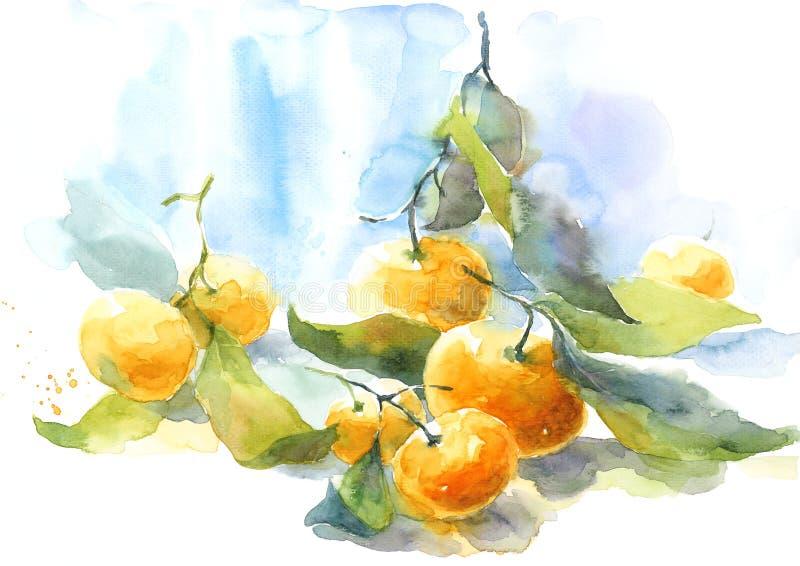 Mandarini con i gambi e l'illustrazione di natura morta dell'acquerello degli agrumi delle foglie dipinta a mano illustrazione di stock