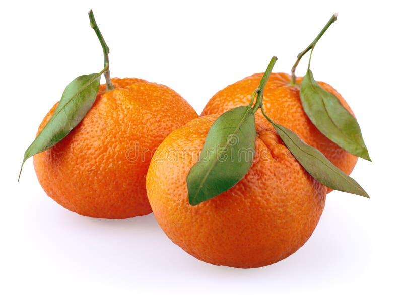 Mandarini con le foglie su bianco immagini stock