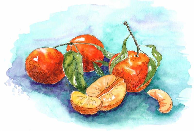 Mandarini dell'acquerello su un fondo blu illustrazione di stock